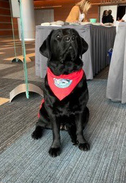 Photo of therapy dog