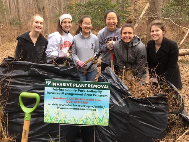 Oakton HS Students Remove Invasive Plants from Difficult Run