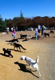 Dogs at dog park