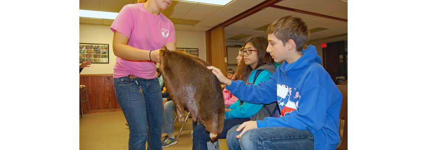 Students look at an animal pelt
