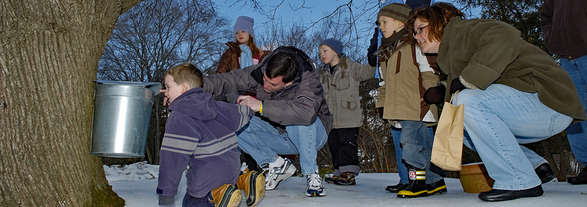 A family looks at a bucket catching sap from a maple tree