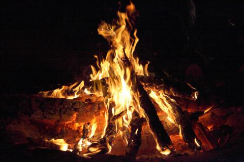 Stargaze or Search for Animals at Park Campfire Programs