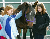 Smiling Girl Scouts meet and pet one of the park's draft horses