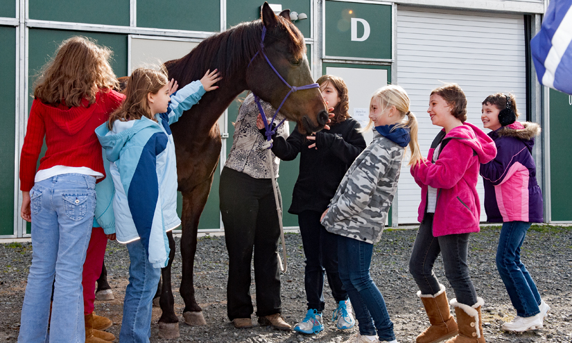 Several Girl Scouts gather around a horse outside a barn