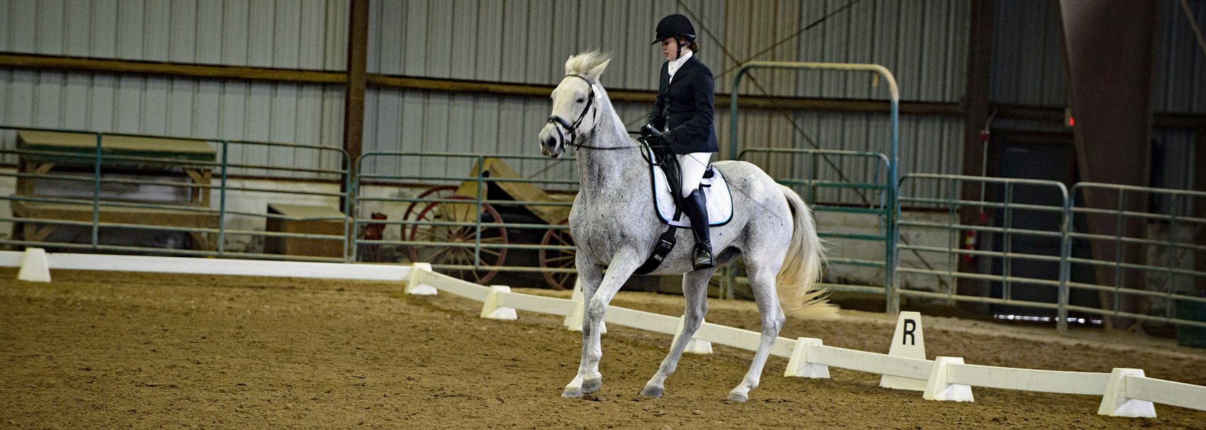 Rider pulls back on reins during dressage performance