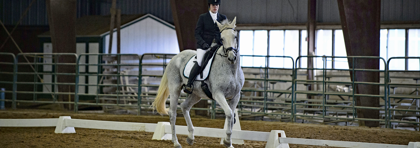 Horse in mid-step during dressage performance