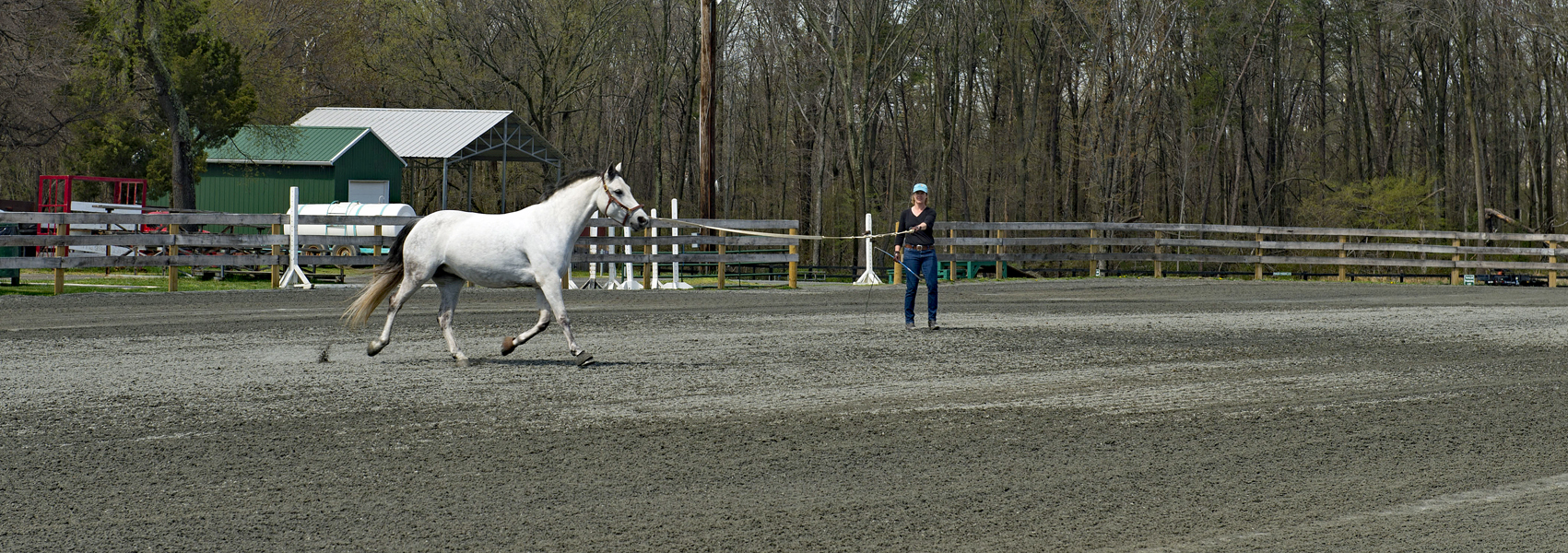 Trainer guides horse in outdoor ring