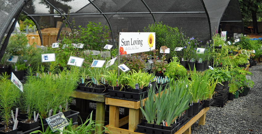 Green Spring Gardens Gift and Plant Shops | Park Authority
