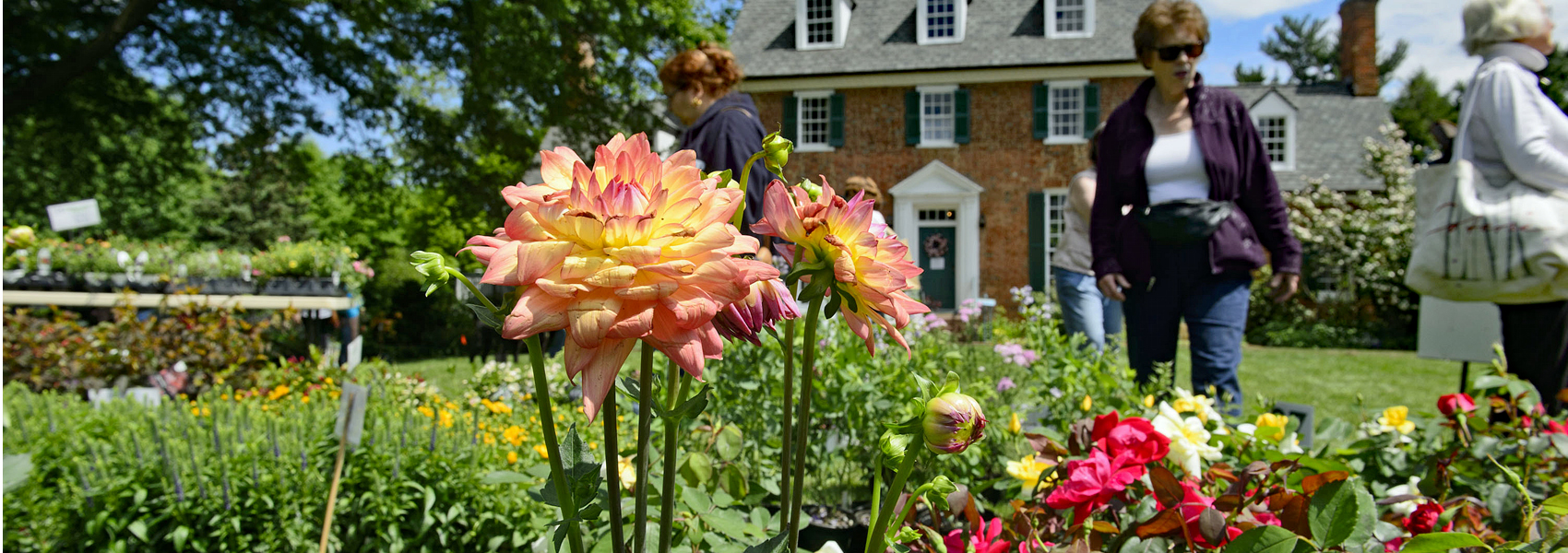 A lone flower blooms in front of Green Spring's historic house