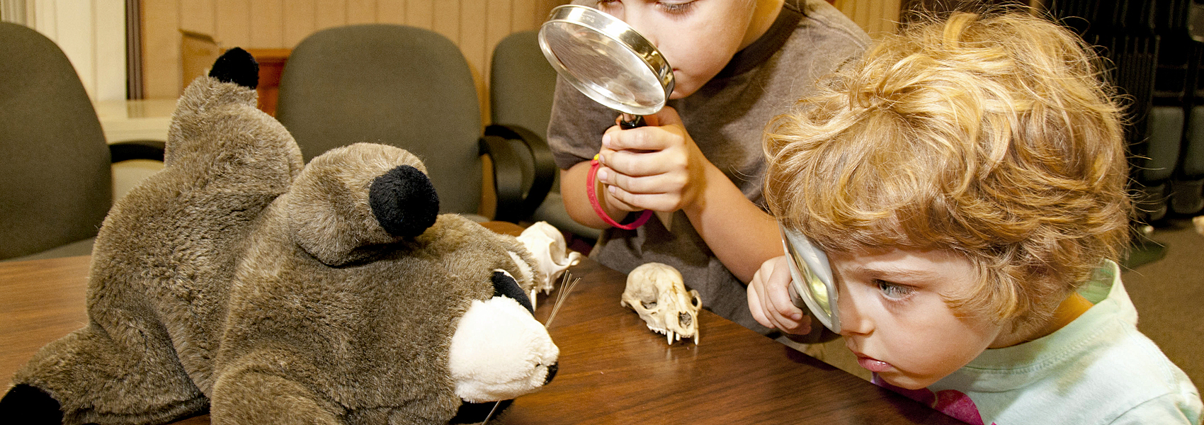 Youngsters use magnifying glasses to look at a teddy bear
