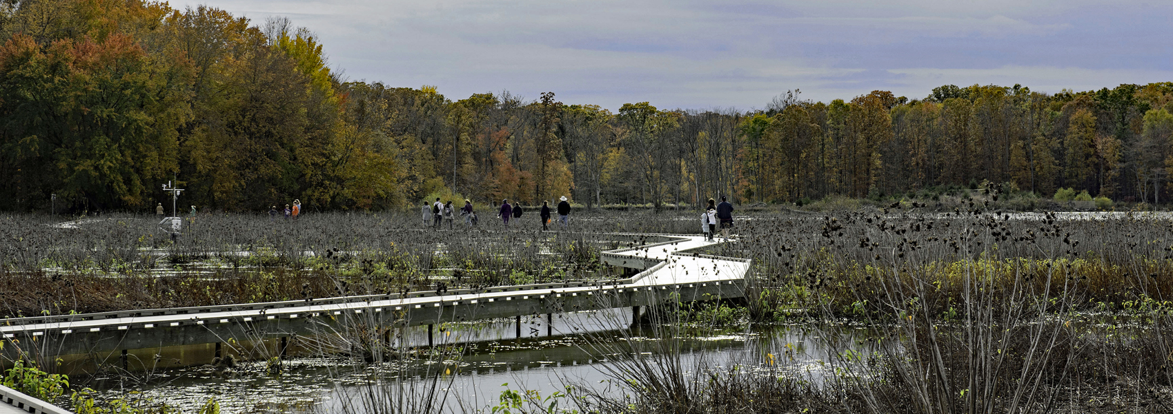 Several people on the Huntley Meadows boardwalk look out over the park's wetlands