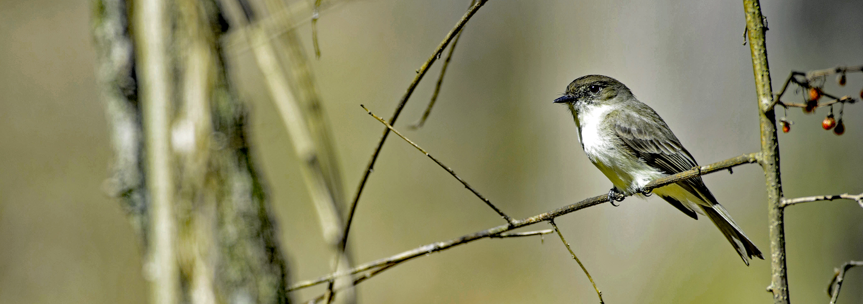 A small bird sits on a tree branch