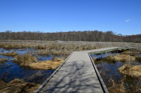Take a Leap into the Wilderness on a Leap Day Walk at Huntley Meadows