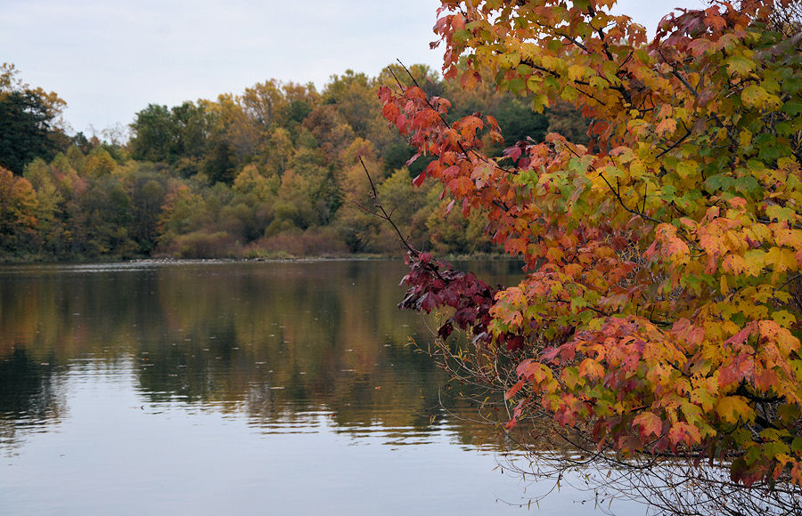 Image of Lake Mercer and vibrant fall foliage
