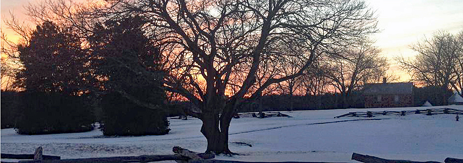 Sunset behind a large red mulberry tree and the historic house