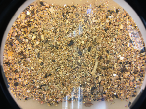Dried Sediment Ready to be Examined