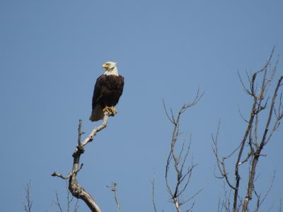 Eagles Nest at Riverbend