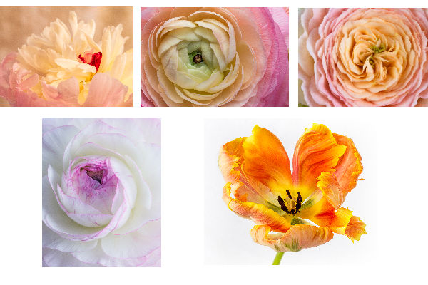 Brighten your Day with a Floral Photography Display at Green Spring Gardens