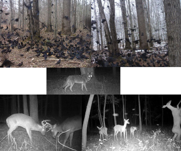 Motion-activated Wildlife Photography