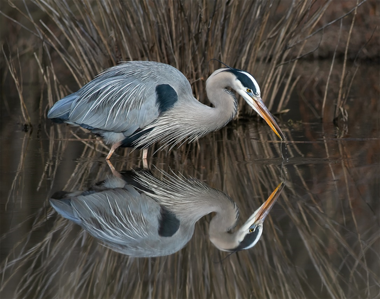 Friends of Huntley Meadows Photo Contest