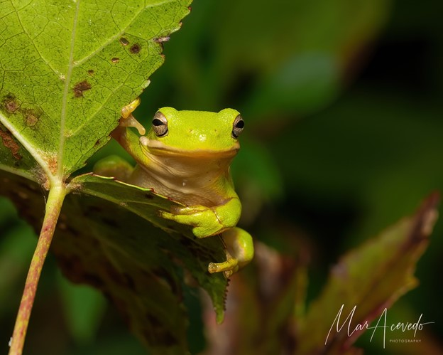 """""""Tree Frog King"""" Focuses on Small, Hard to Spot Things in Nature"""