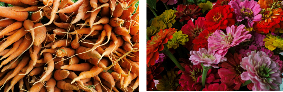 Shop for Veggies & Photo Ops at Local Farmers Markets