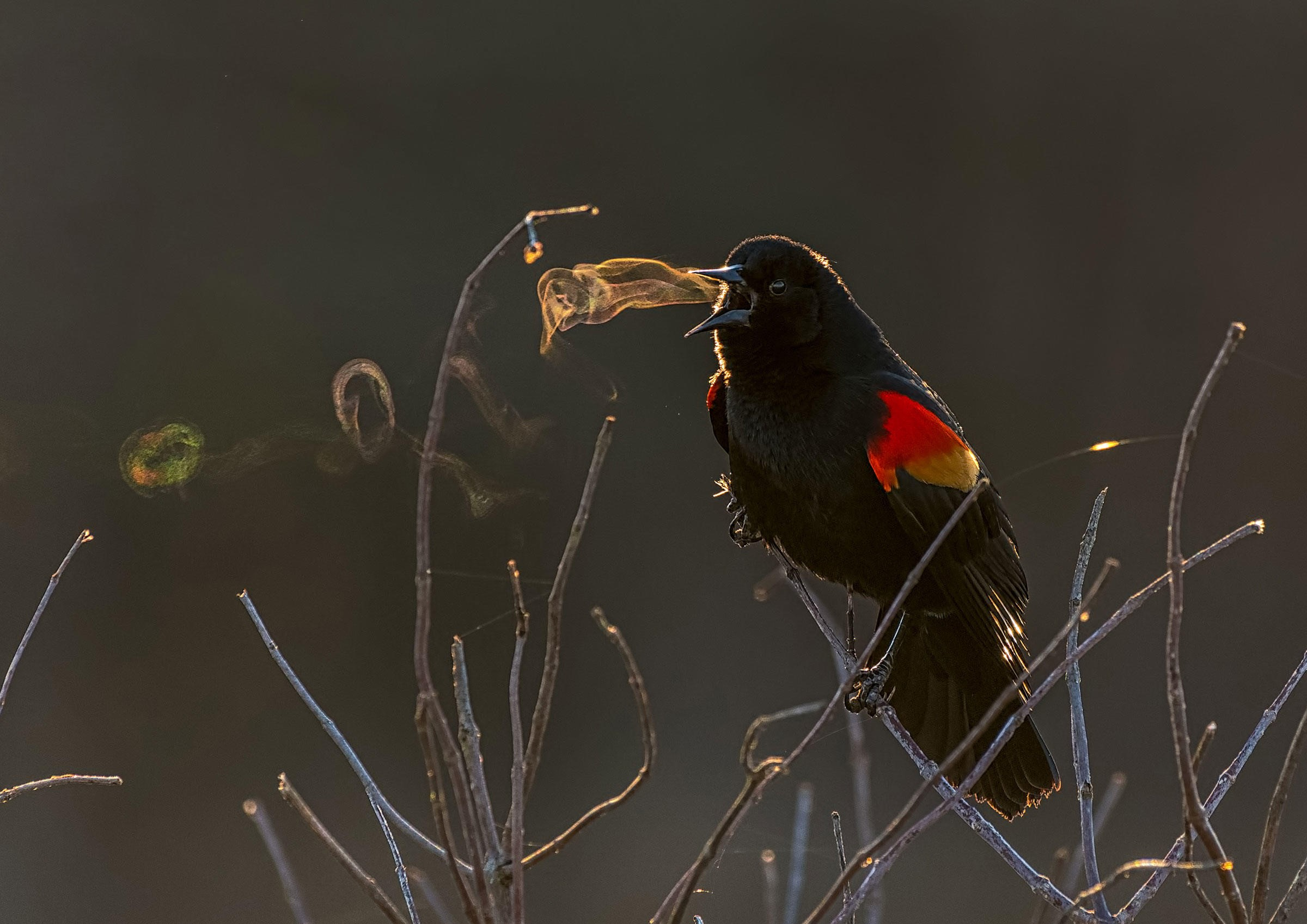 Wildlife Photo at Huntley Meadows Wins Top Audubon Prize