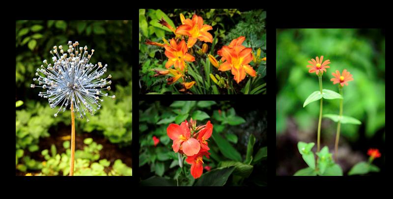 Garden Photography Workshop Series