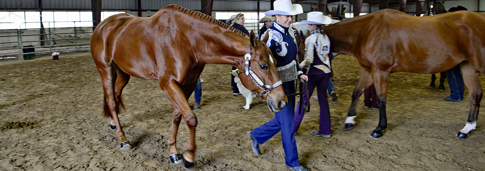Woman in full riding attire walks with her quarter horse