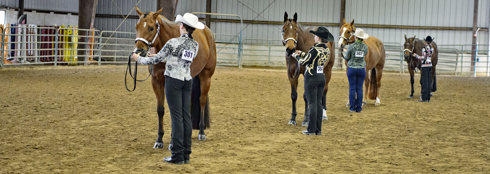 Four competitors prep their horses for quarter horse competition