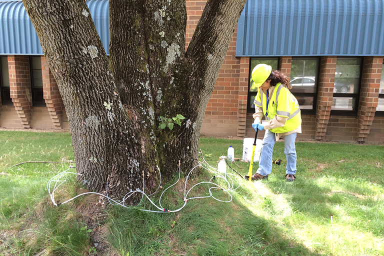 staff injecting ash at County school