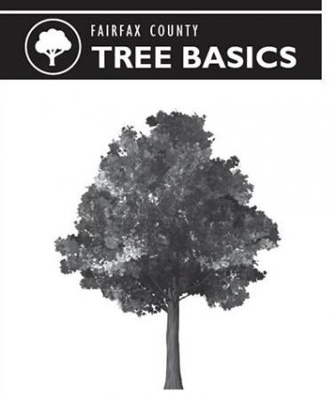 Tree Basics Outlet