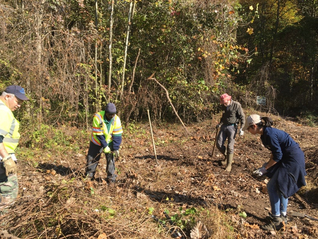 removing nonnative invasive species