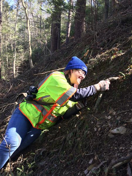 An urban forester climbs a steep hill to monitor hemlock trees.