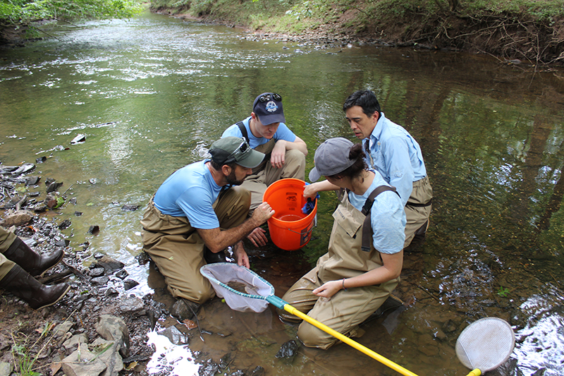 Assessing Water Quality