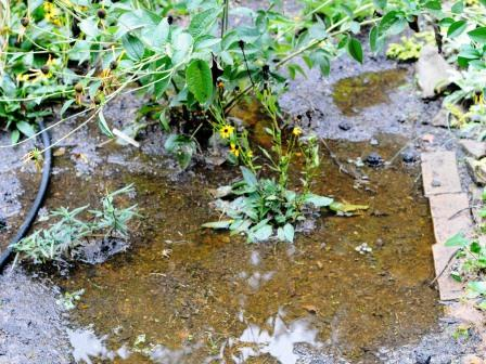 Wet Yard - Solving Drainage Problems | Northern Virginia