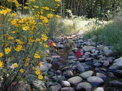 A restored stream - flowers and habitat