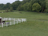 A high quality pasture for horse with temporary fences allows for rotational grazing.