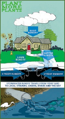 Stormwater travels from your yard to local streams, creeks, rivers and the bay