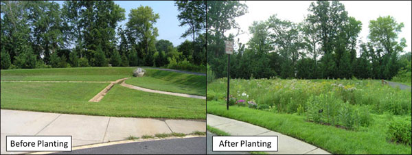 A dry pond before and after planting