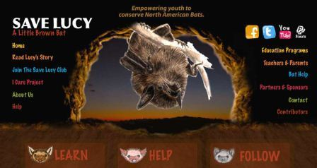 Save Lucy (a little brown bat)