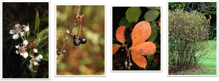 Native Seedling Sale | Northern Virginia Soil and Water Conservation