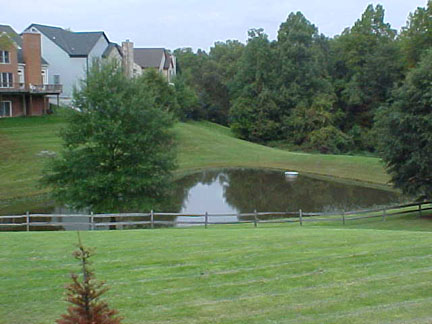 A wet pond in a residential area.