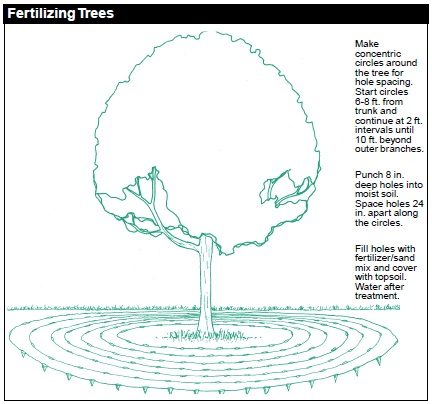 Technique for Fertilizing Trees: a) Make concentric circles around the tree for hole spacing. Start circles 6-8 ft from trunk and continue at 2 ft intervals until 10 ft beyond outer branches. b) Punch 8-in deep holes into moist soil. Space holes 24 in apart along the circles. c) Fill holes with fertilizer/sand mix and cover with topsoil. Water after treatment.
