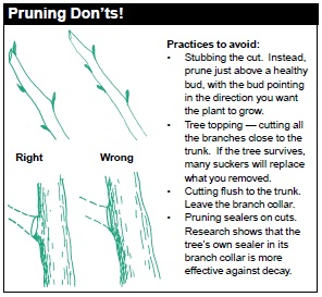 Pruning DON'Ts: a) Stubbing the cut. Instead, prune just above a healthy bud, with the bud pointing in the direction you want the plant to grow. b) Tree topping (cutting all the branches close to the trunk). If the tree survives, many suckers will replace what you removed. c) Cutting flush to the trunk. d) Pruning sealers on cuts. Research shows that the tree's own sealer in its branch collar is more effective against decay.