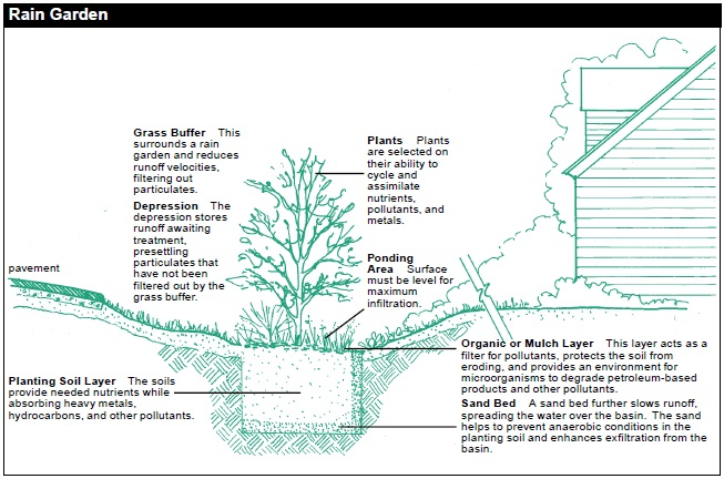 RAIN GARDEN, components from top to bottom. Plants: Plants are selected on their ability to cycle and assimilate nutrients, pollutants, and metals. Grass buffer: This surrounds a rain garden and reduces runoff velocities, filtering out particulates. Depression: The depression stores runoff awaiting treatment, presettling particulates that have not been filtered out by the grass buffer. Ponding Area: Surface must be level for maximum infiltration. Organic or Mulch Layer: This layer acts as a filter for pollutants, protects the soil from eroding, and provides an environment for microorganisms to degrade petroleum-based products and other pollutants. Planting Soil Layer: The soils provide needed nutrients while absorbing heavy metals, hydrocarbons, and other pollutants. Sand Bed: A sand bed further slows runoff, spreading the water over the basin. The sand helps to prevent anaerobic conditions in the planting soil and enhances exfiltration from the basin.