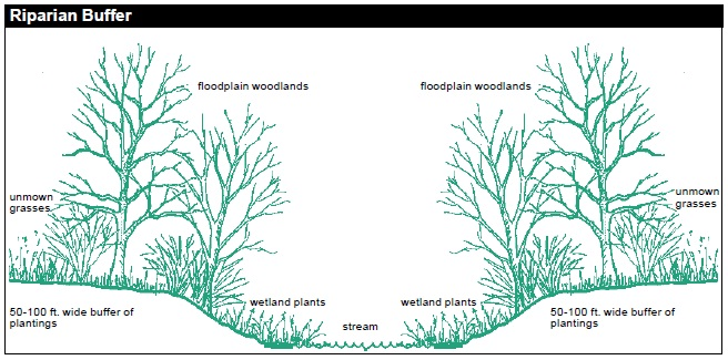 The riparian buffer forms the banks of a stream. Maintain a 50-100-ft. wide buffer of plantings on each side of the stream. From left bank to right bank: unmown grasses, floodplain woodlands, wetland plants, stream, wetland plants, floodplain woodlands, unmown grasses.