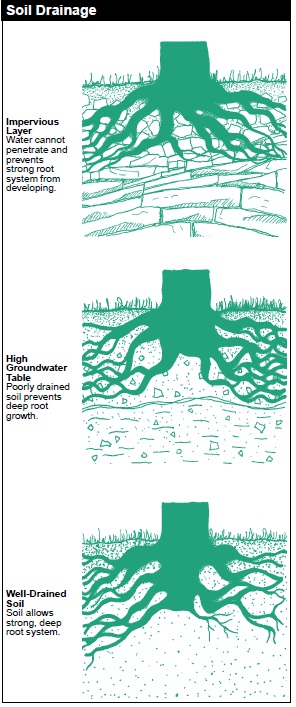 Soil Drainage is described by how well the soil handles water on the surface. Impervious Layer: Water cannot penetrate and prevents strong root system from developing. High Groundwater Table: Poorly drained soil prevents deep root growth. Well-Drained Soil: Soil allows strong, deep root system.