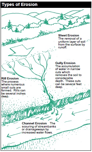 Types of Erosion: Soil erosion occurs when topsoil is washed or blown away by water or wind. (A) Sheet erosion: The removal of a uniform layer of soil from the surface by runoff. (B) Rill erosion: The process where numerous small cuts are formed. Rills can be several inches deep. (C) Gully erosion: The accumulation of water in narrow cuts which removes the soil to considerable depth. These cuts can be several feet deep. (D) Channel erosion: The scouring of streambanks or drainageways by increased water flows.